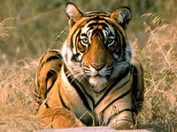 Goldan-Triangle-with-Ranthambore-8-Days-7-Nights.